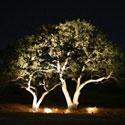 Управление архитектурным освещением в парке